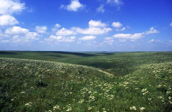 flint hills korea