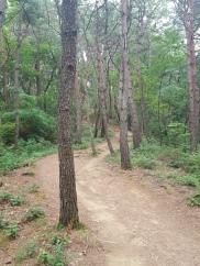 bamboo hike korea