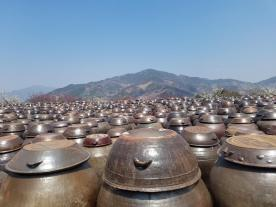 A sea of traditional onggi pots (옹기)